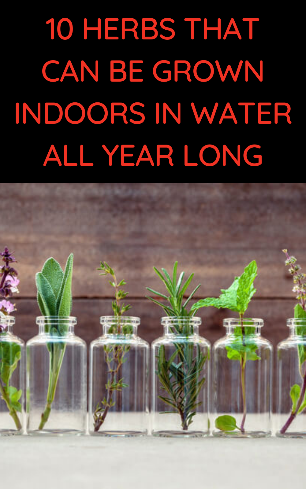 10 Herbs That Can Be Grown Indoors in Water All Ye