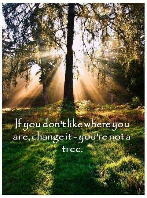 Youre Not A Tree Quotes To Think About Inspirational Quotes