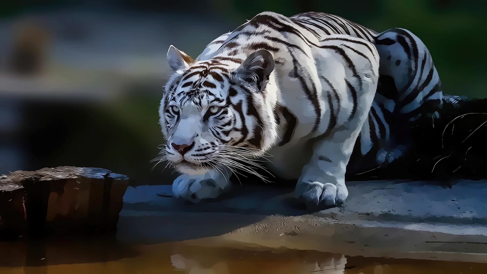 WhiteTiger0126.png 5120x2880x24(RGB) #white #tiger  #animal #endangered #predator #majestic