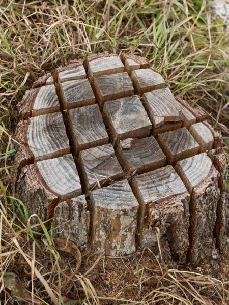 Einen Baumstumpf entfernen: Die besten Methoden