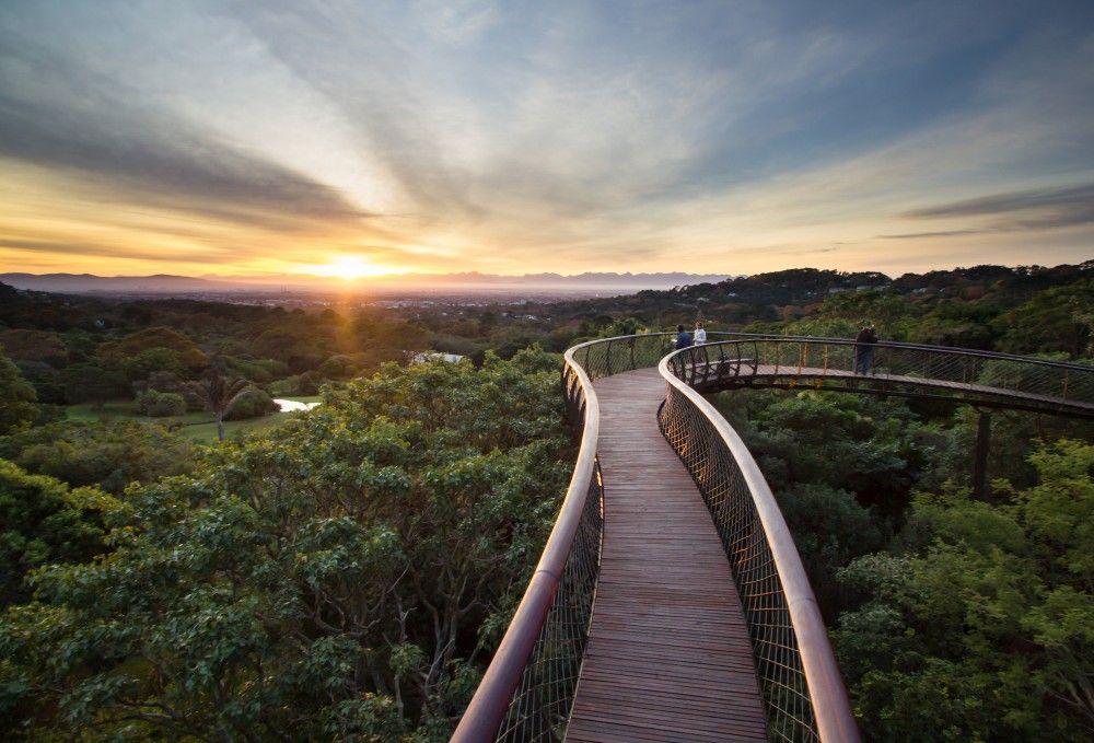 Kirstenbosch Centenary tree canopy walkway / Mark Thomas Architects