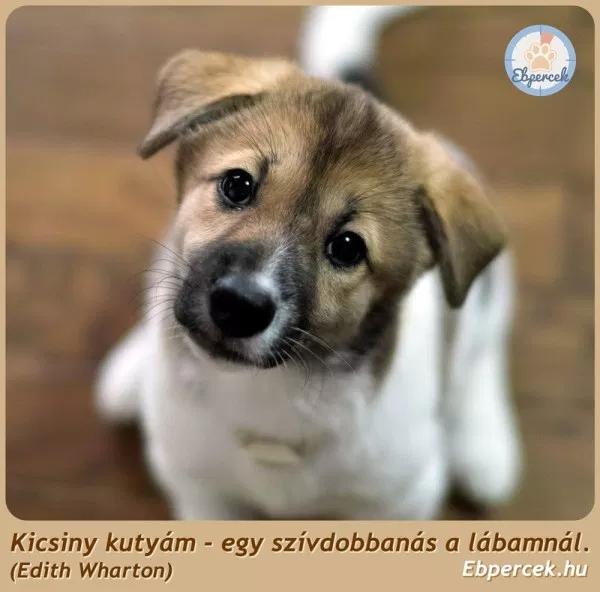 kutyaszeretet idézetek Közzétéve itt: ARANYOS KUTYA !