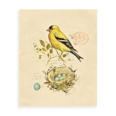 I'm into birds right now, even though the 'put-a-bird-on-it' fad is kind of over.