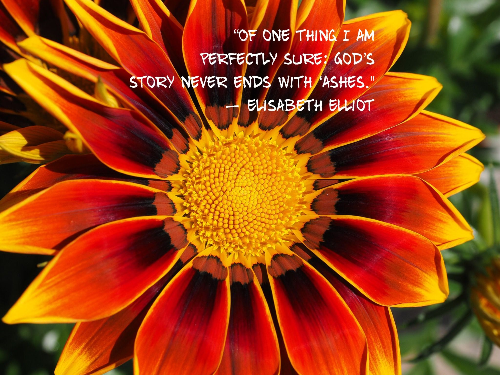 Pin by kelley spence on quotes stories poems pinterest poem narrow down the list of most beautiful flowers is not easy izmirmasajfo