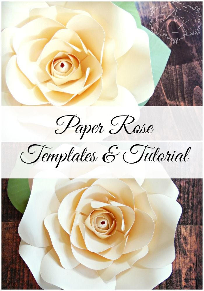 Paper rose template patterns and tutorials diy paper roses by paper flower templates how to paper flowers flower wall backdrops mightylinksfo