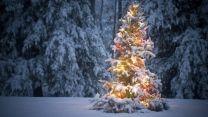 Wald Tanne Girlande Lichtern Schnee Winter Festliche Weihnachtsbaume Weihnachtsbaum Wallpaper Weihnachten Im Freien