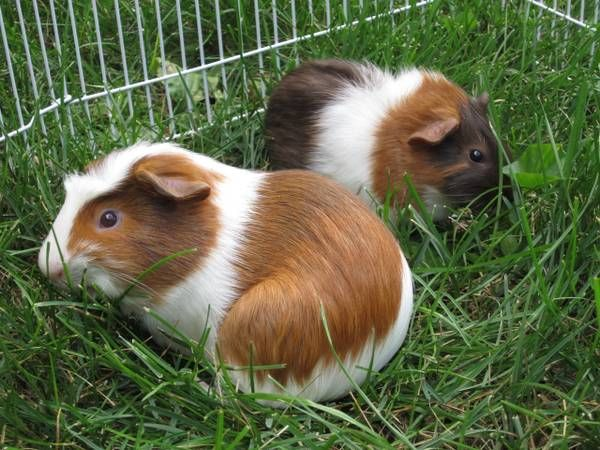 Pin On Craigslist Animals Need Saving Too