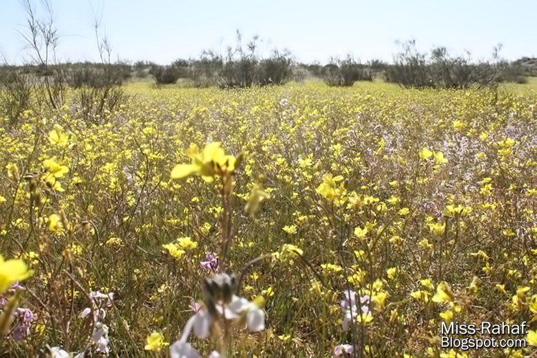 طبيعة ربيعية و لا في أحلى من ألوان الشتاء و الربيع Outdoor Farmland Vineyard