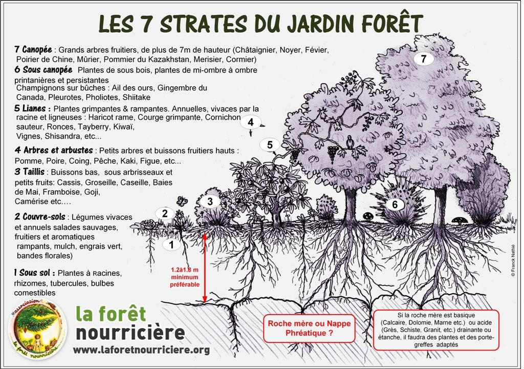 Base De Donnees Des 7 Strates En 2020 Jardin Foret