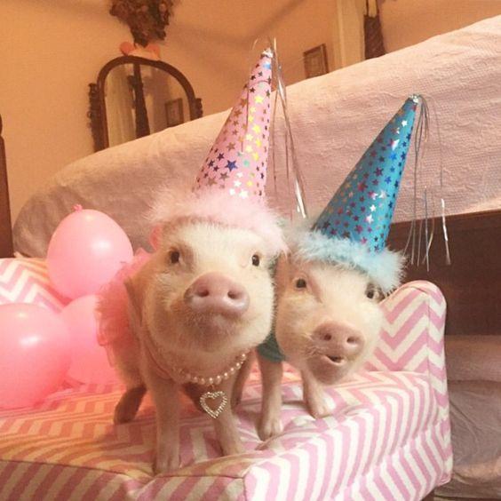 поросенка с днем рожденья или рождения поздравления прелестей