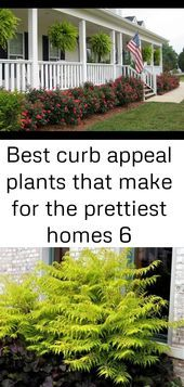 Best curb appeal plants that make for the prettiest homes 6,  #Appeal #curb #Homes #Landscapi... #knockoutrosen