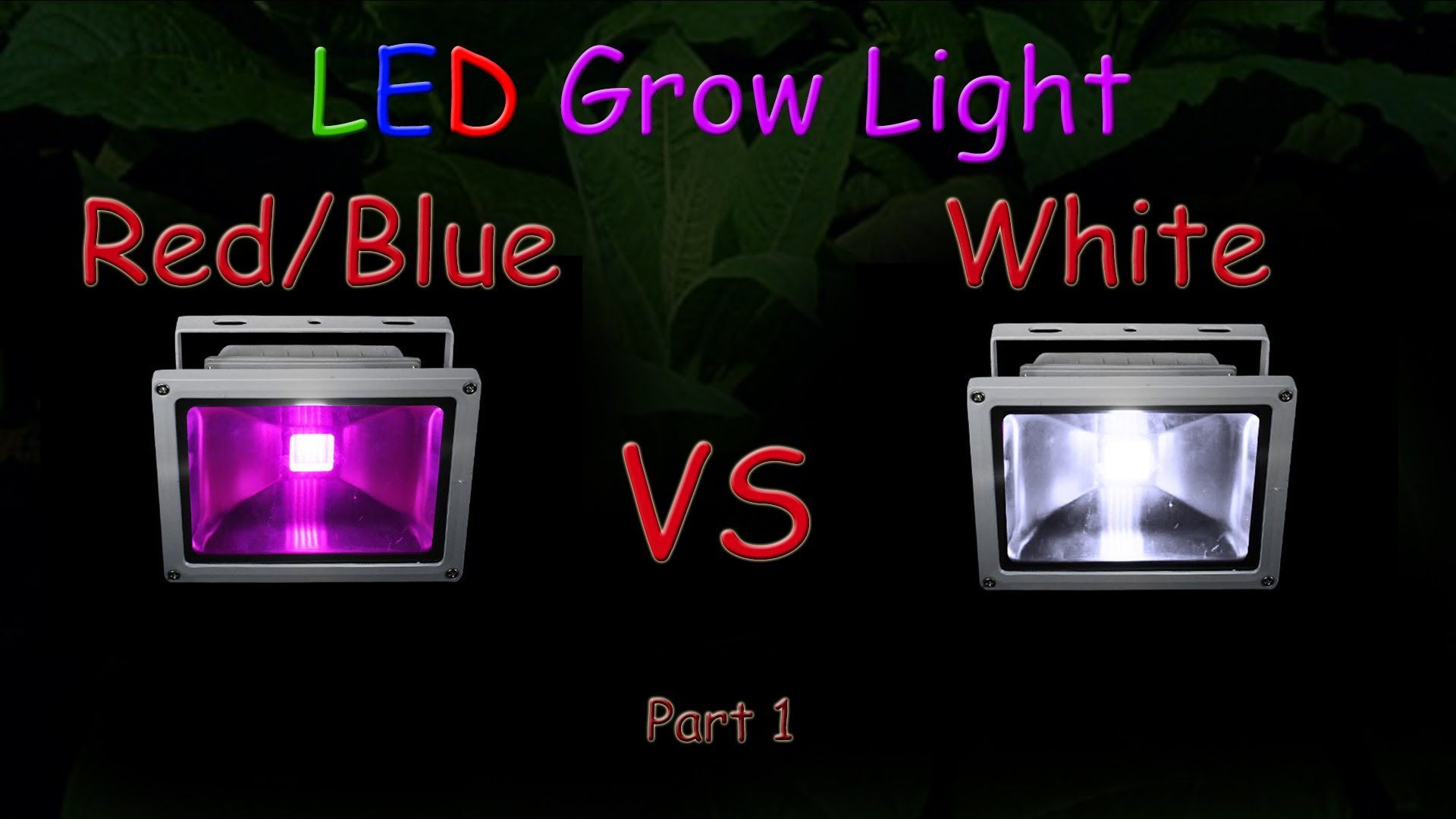 White Led Vs Red Blue Led Grow Light Grow Test Part 1 Educational Gardens Led Grow Lights Grow Lights Red Blue