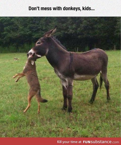 ...sometimes donkeys don't tolerate intruders