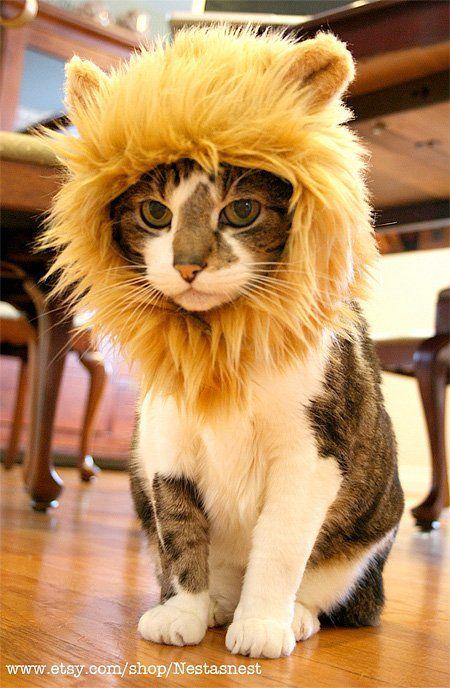 Trasforma il tuo gatto in un leone