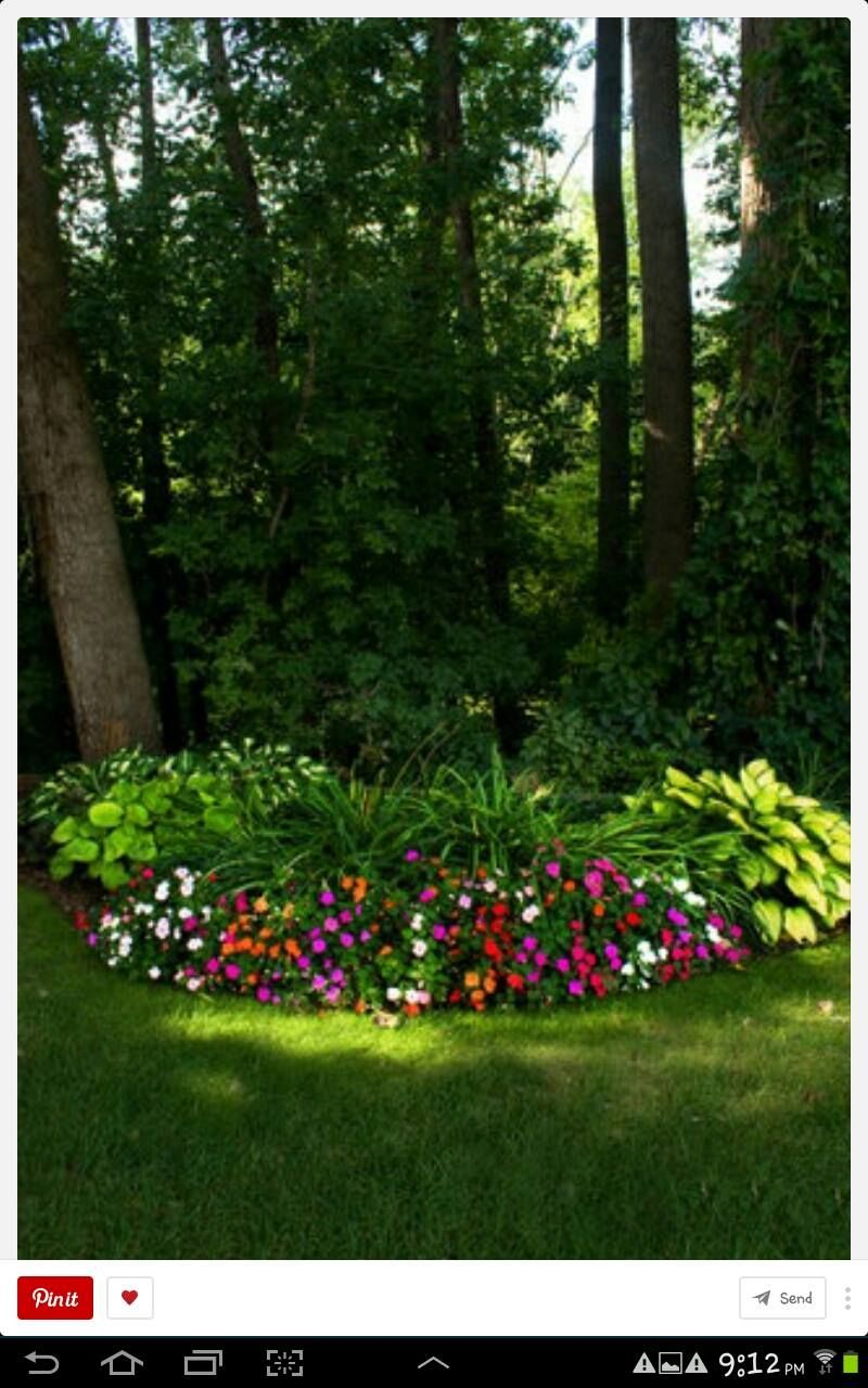 Pin by Ruth Weibel on Pots Shade plants, Beautiful