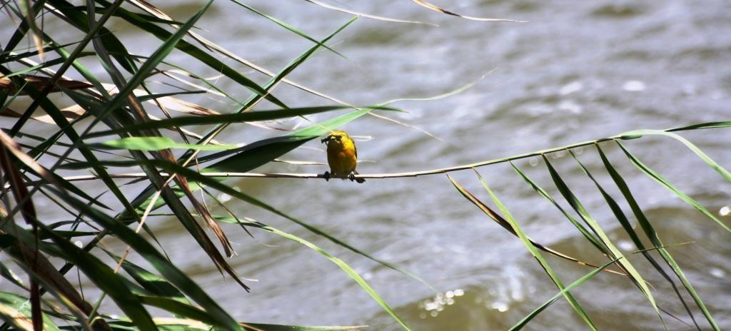 Birding in Mkuze Game Reserve