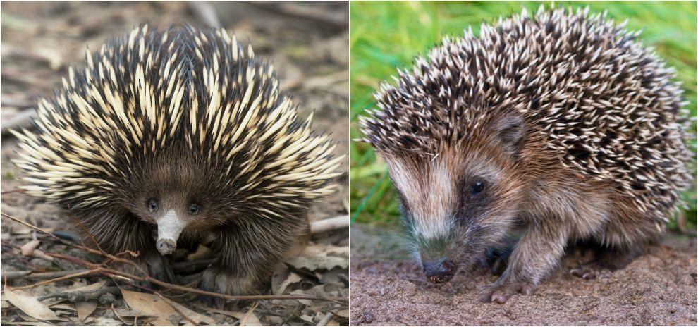 8 uncanny examples of convergent evolution Convergent evolution - animal specialist sample resume