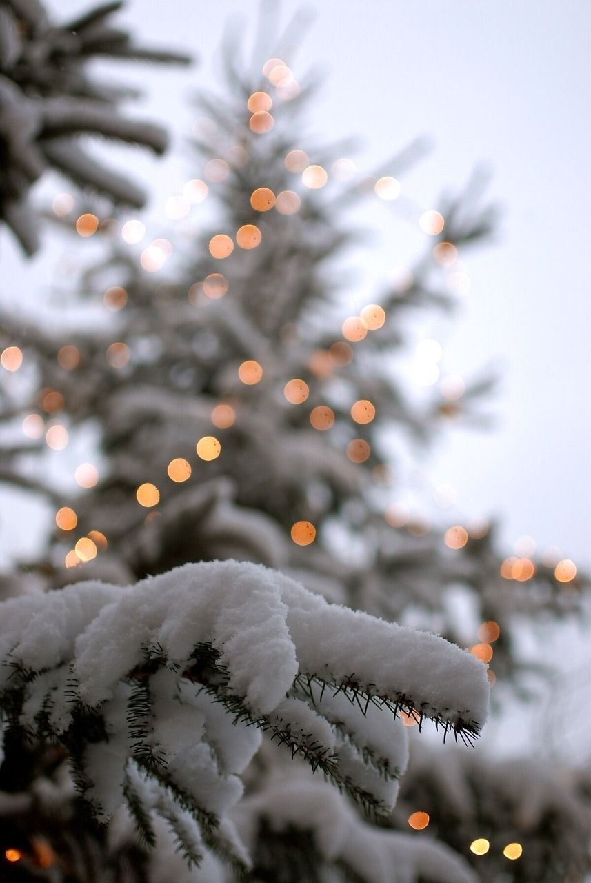 """Even the strongest blizzards start with a single snowflake."""""""