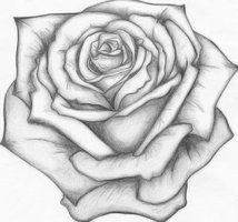 Rose Drawing 1 Year Ago In Other Old School Rose Prison Art Rose Drawing