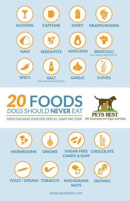 20 Foods Dogs Should Never Eat Dog Food Recipes Dogs Pets