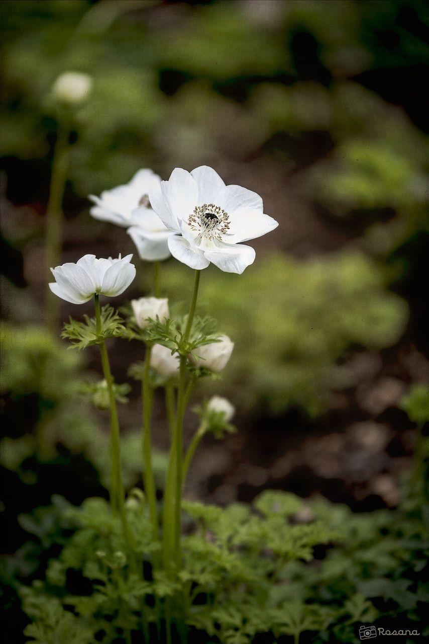 A Woodland Walk Secret Garden Pinterest Flowers Gardens And