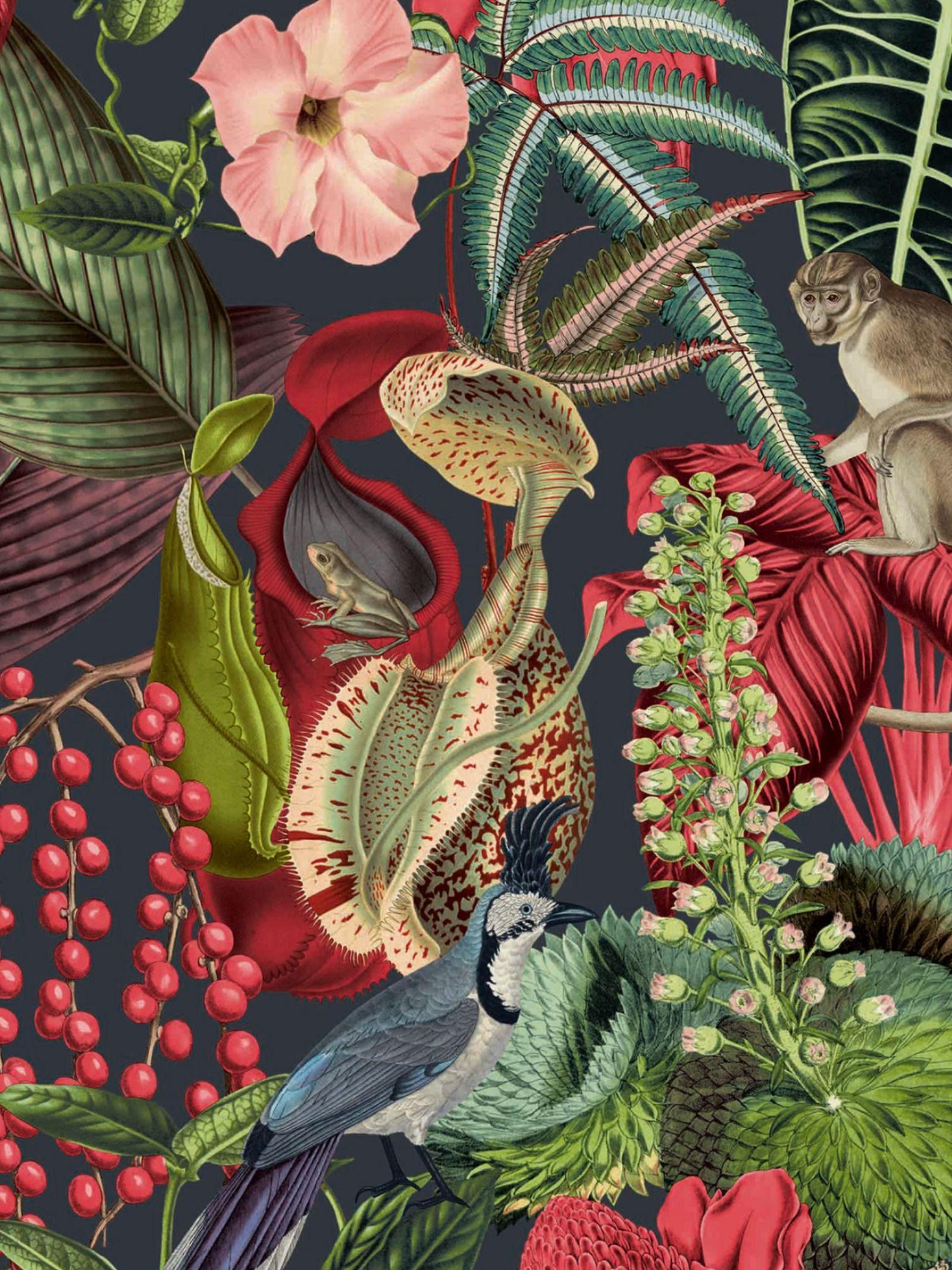 Amazon Wallpaper Black Red Grandeco Jf2201 Amazon Wallpaper Wallpaper Floral Wallpaper