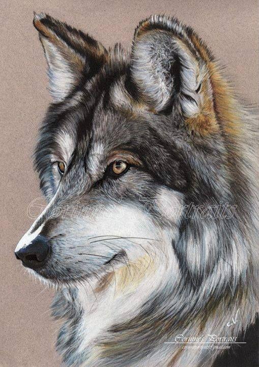 Wolf Drawing Pintura Del Lobo Dibujo De Lobos Dibujos De Colores