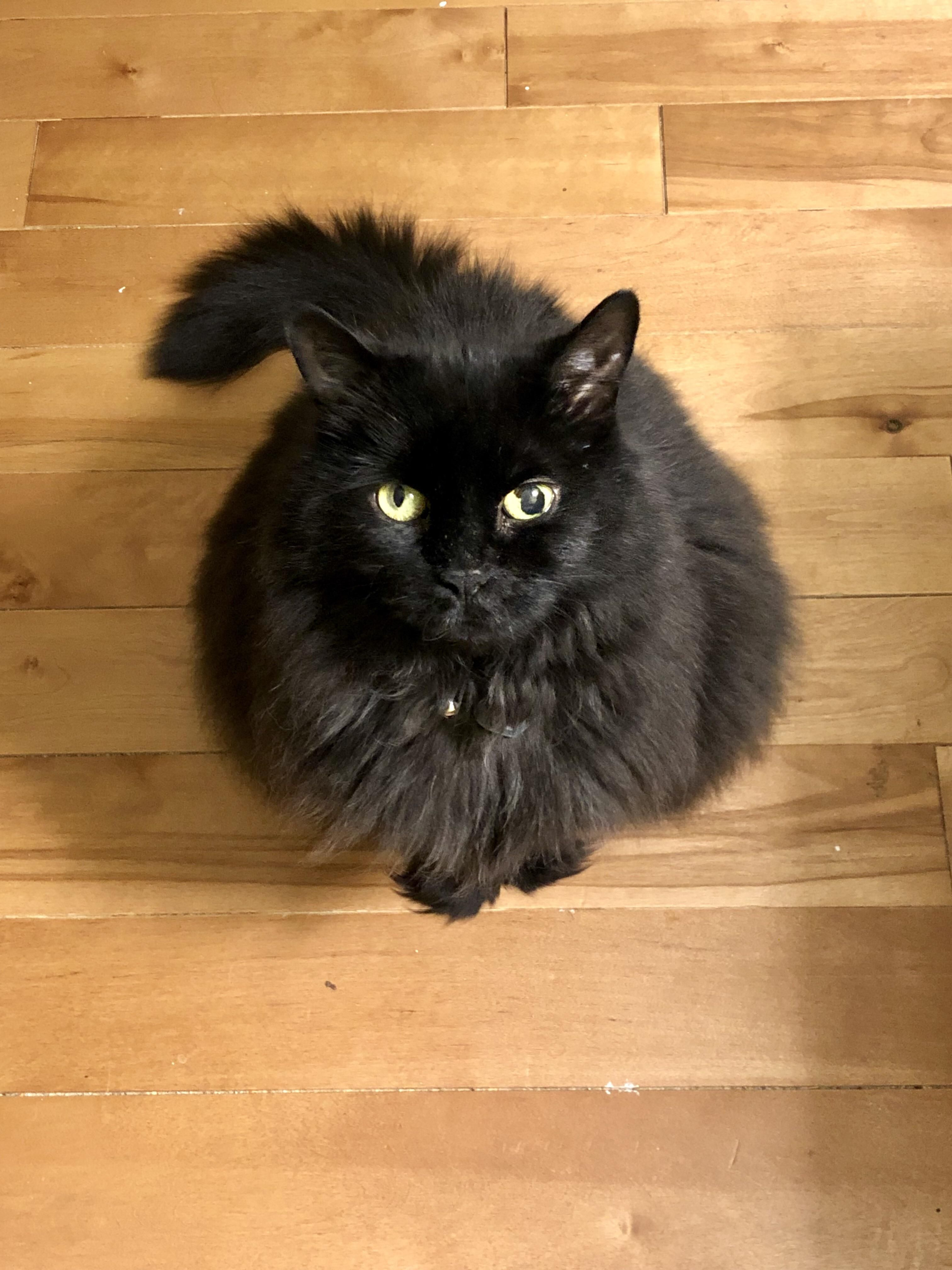 Pepper Is Looking Extra Floofy Tonight Kittens Cutest Cat Pictures For Kids Beautiful Cats Pictures