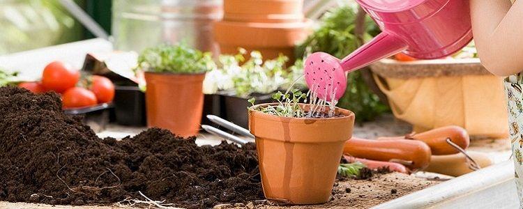 Dicas para jardinar - Como montar seu vaso  Fonte: CantimVerdim - http://www.contem1grama.com.br/ecoblog/2017/04/27/dicas-para-jardinar/