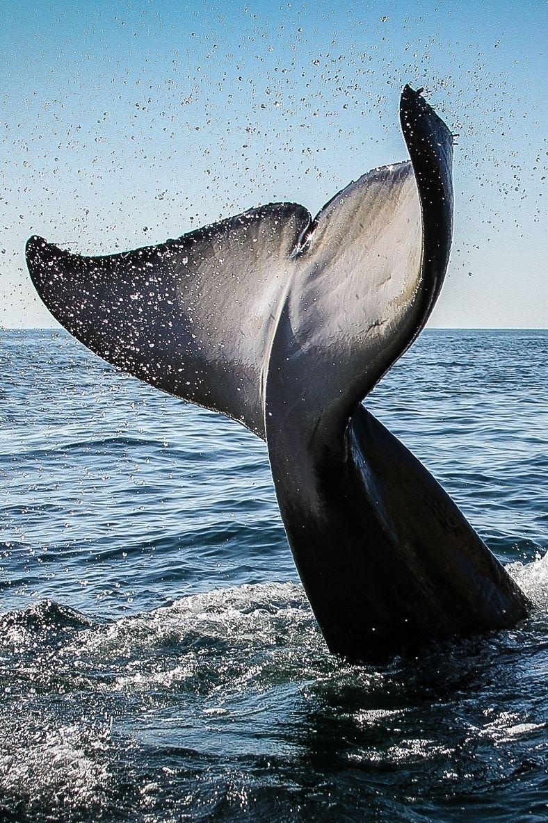 Pegasebuzz orca killer whale orque black fish by xavier pegasebuzz orca killer whale orque black fish by xavier garcia altavistaventures Choice Image