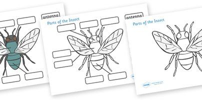 Worksheets Insect Body Parts Worksheet parts of an insect preschool google search teaching pre school labelling activity sheets a lovely set minibeast topic worksheets allowing you to label the key o