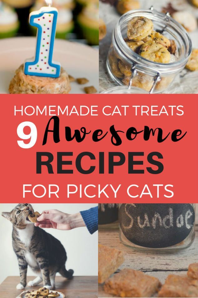 10 Awesome Homemade Cat Treats for Picky Cats Homemade
