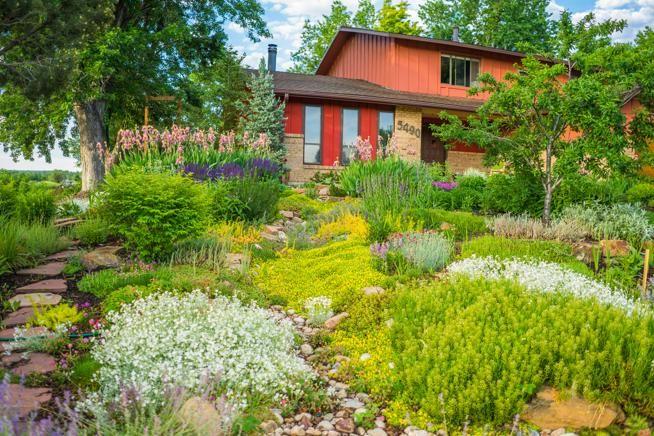 denver landscape - Google Search | Water garden kit, Low ...