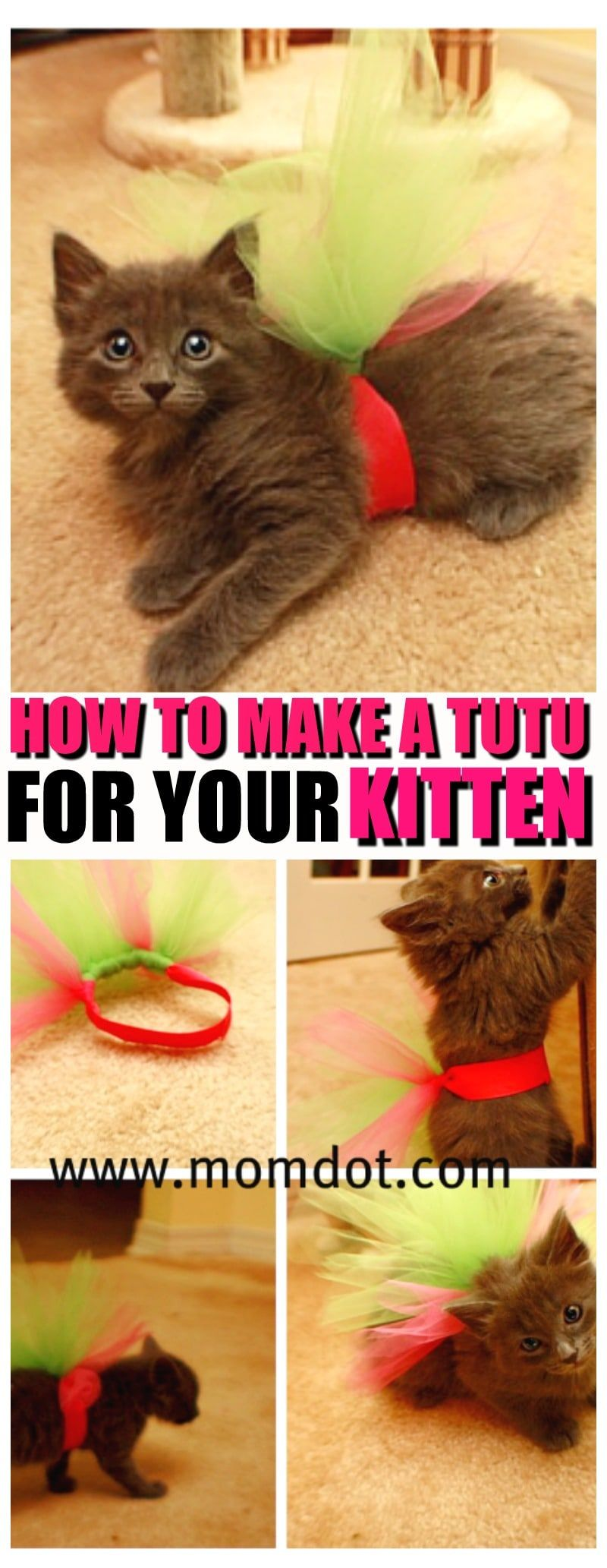 How To Make A Tutu For Your Kitten Dog Costumes For Kids Diy Dog Stuff Diy Kitten Clothes