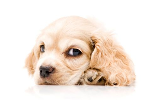 Can Dogs Be Allergic To Bone Marrow