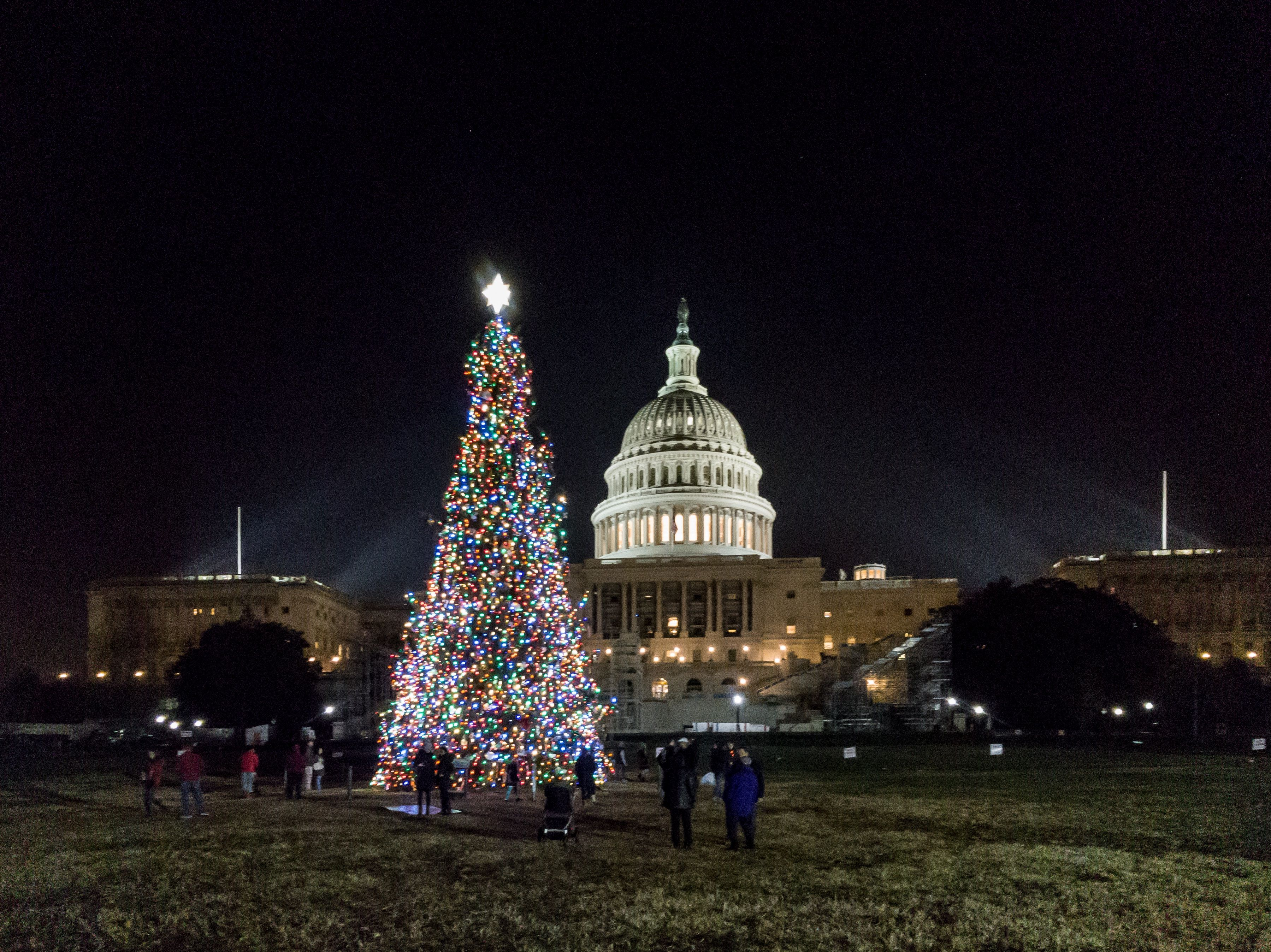 capitol christmas tree in front of the capitol in washington dc 2016 - Washington Dc Christmas Tree