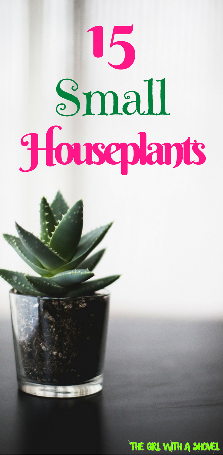 15 Indoor Plants For Small Spaces Small Indoor Plants Small House Plants Houseplants Indoor