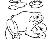 Mewarnai Gambar Hewan Katak Berjemur Coloring Character