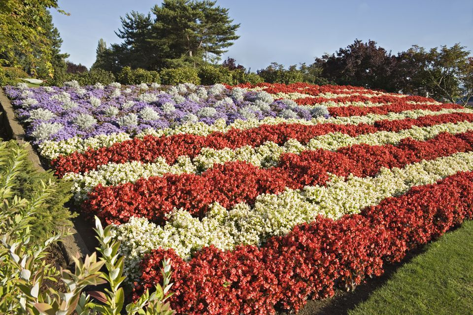 Best Choices For Red White And Blue Flowers Blue Flowers Garden White And Blue Flowers Blue Plants