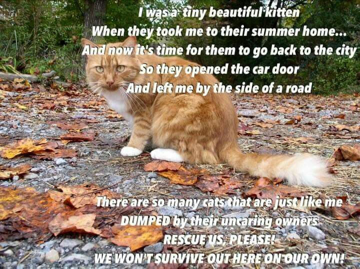Pin By L F On Please Rescue And Adopt Cat Rescue Cats Homeless Pets