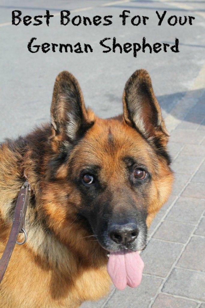 Best Bones For German Shepherds German Shepherd Dogs German