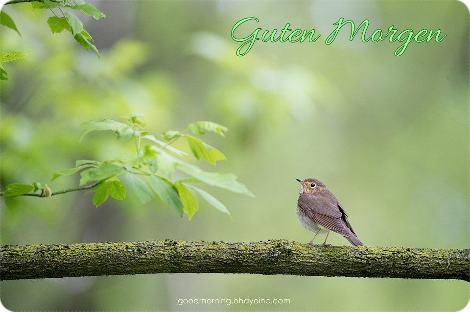 Guten Morgen Guten Morgen Animals Birds Nature Hd