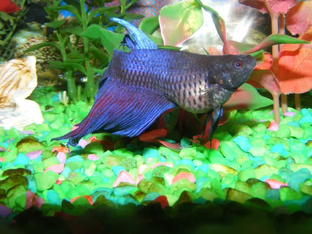 Freshwater Fish Diseases, Fish Medicine, Fin Rot Treatment ...