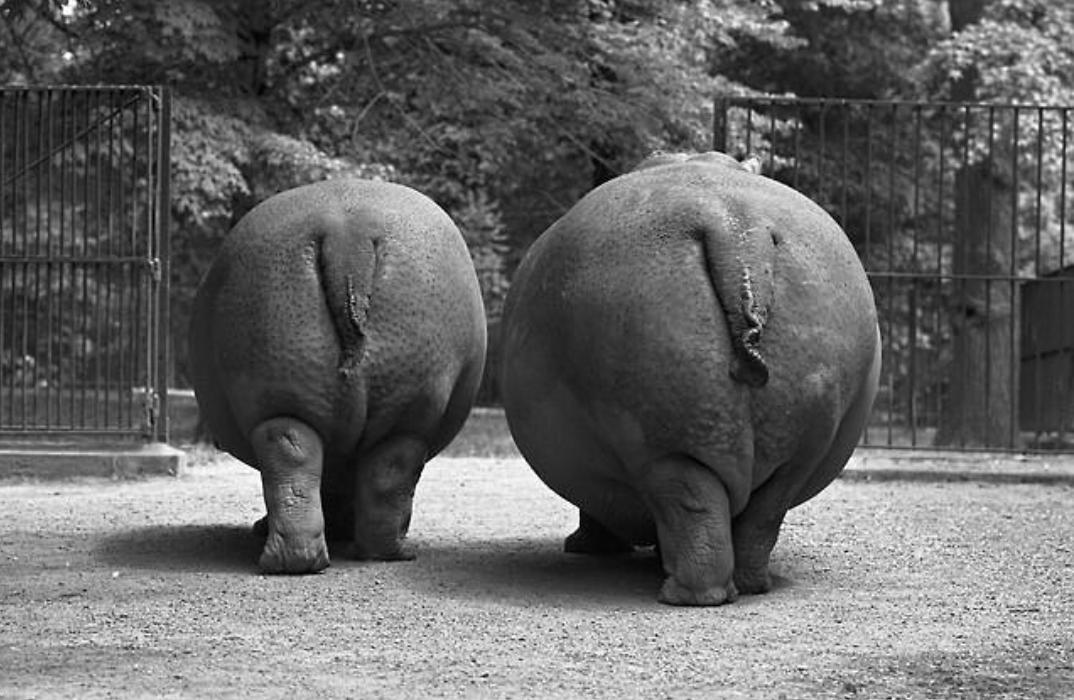 Pin by Wai Kit on Animals Cute hippo, Baby hippo, Hippo