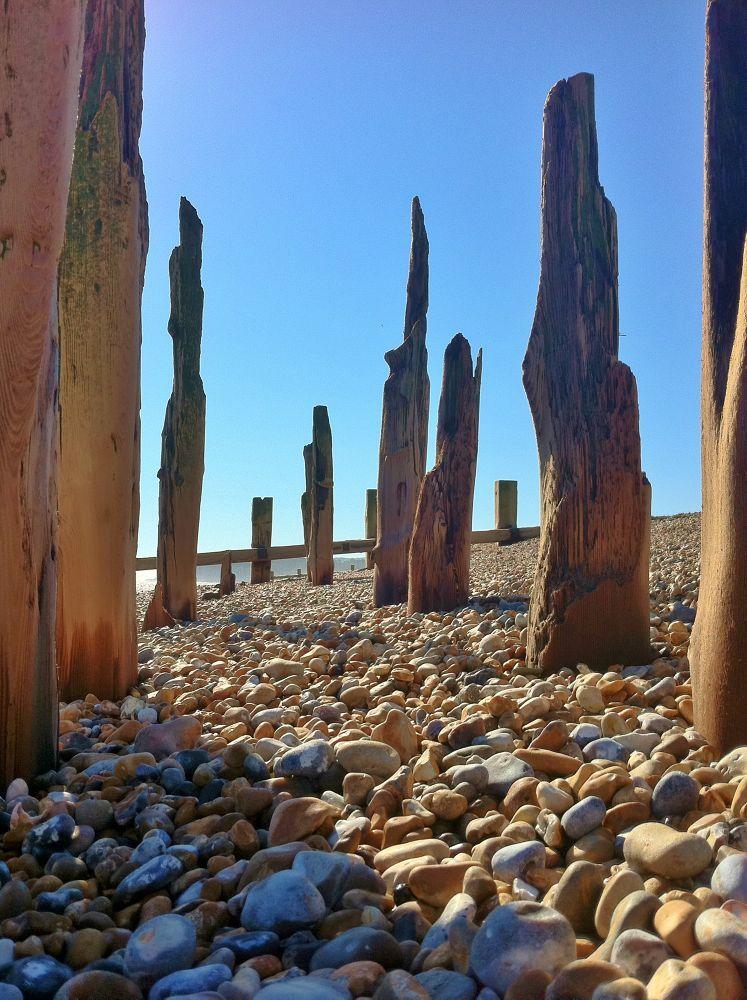 Beach Trees by Nigel Rainton