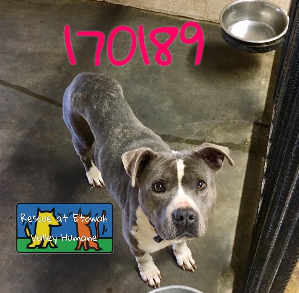 This dog was found in Middletown, CT on... Middletown