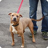 Pin On Adoptable Pets From Adopt A Pet