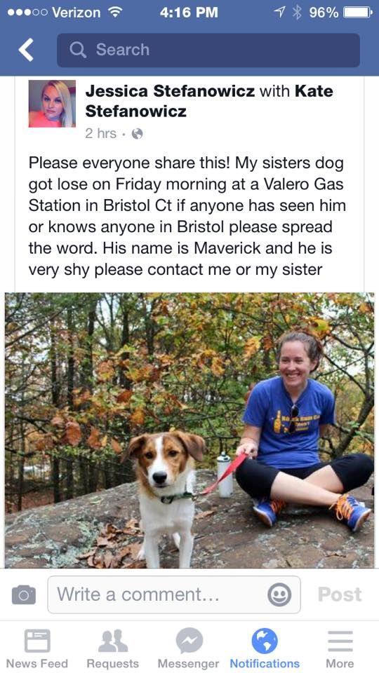 Eli Ann Friends Of The Southington Dog Park 5 Hrs Farmington