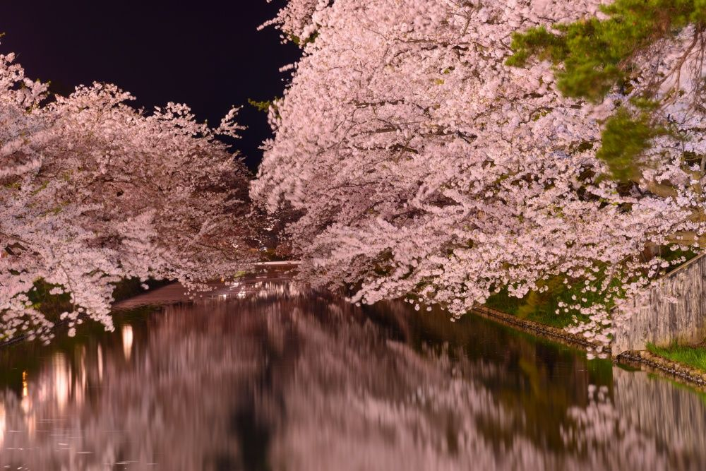12 Magical Photos Of Cherry Blossoms Beautiful Nature Photo Cherry Blossom