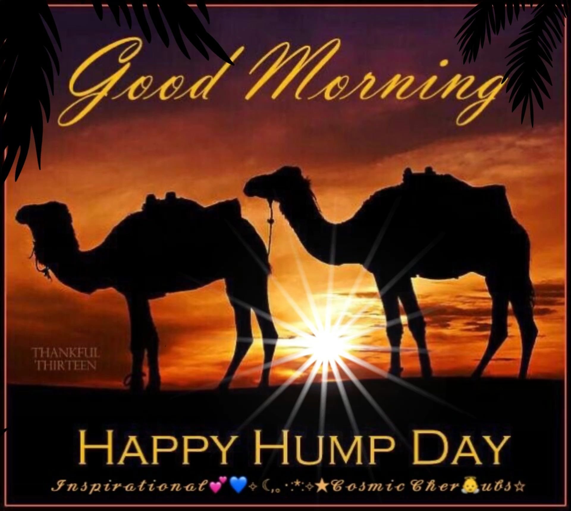 Good Morning Happy Wednesday Quotes Wednesday Hump Day Good Morning Funny